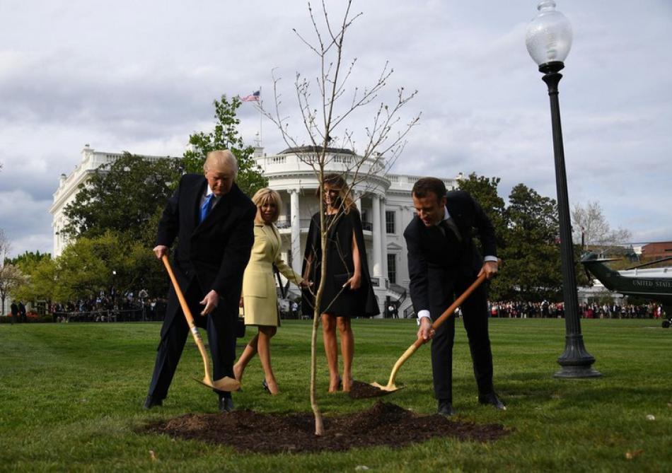Maison-Blanche: l'étonnante disparition de l'arbre planté par Trump et Macron