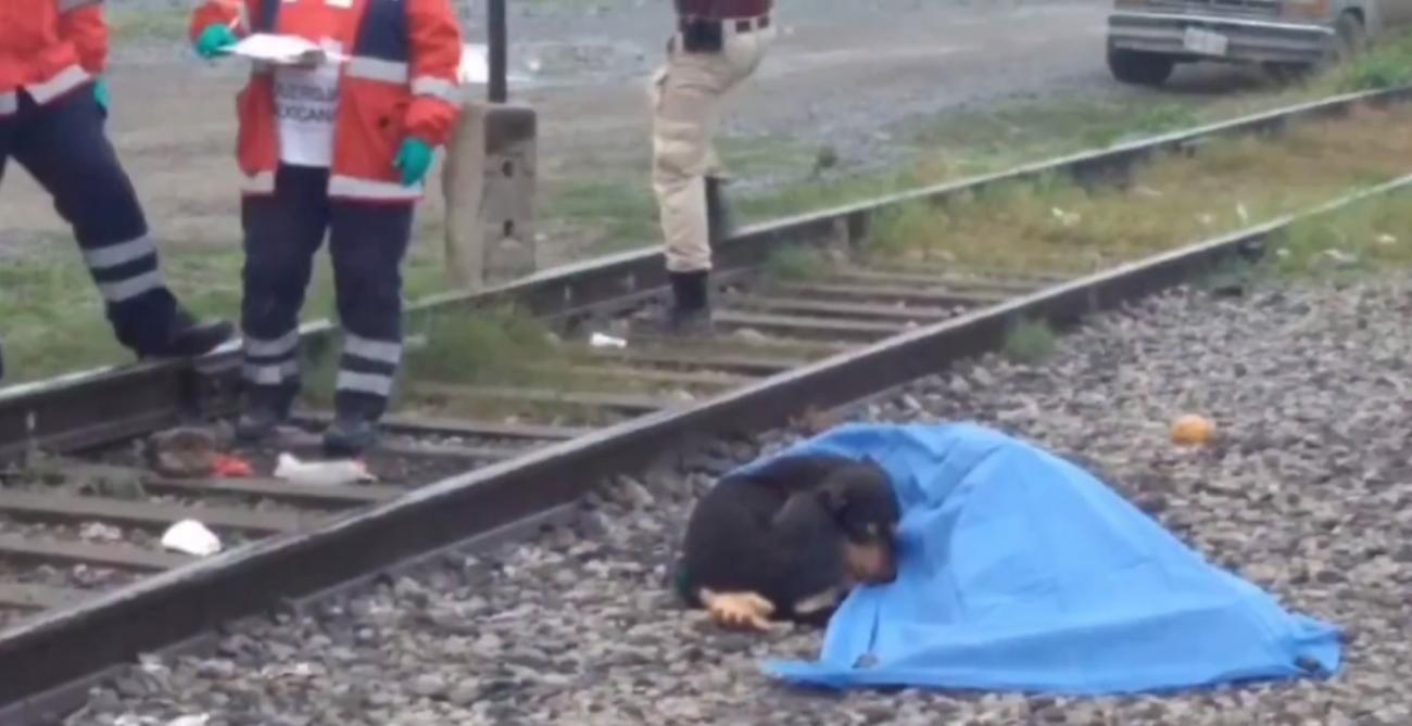 Un chien veille son maître tué par un train