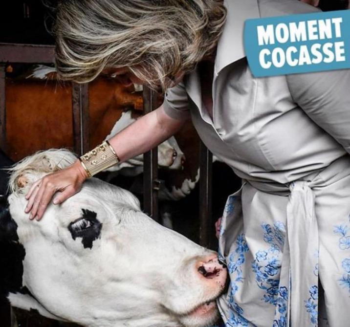Une vache tente de manger la robe de la reine Mathilde (vidéo)