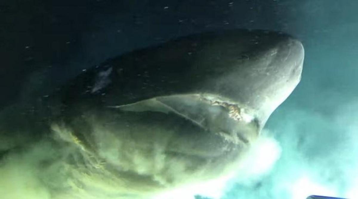 Les images impressionnantes du squale en Floride — Requin griset