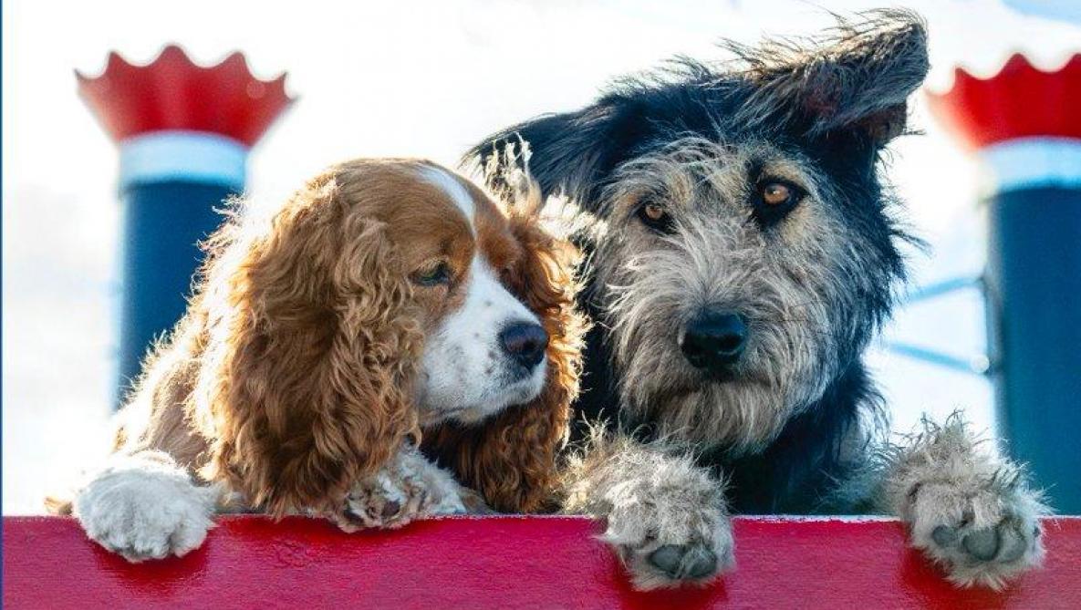 Disney dévoile une photo des chiens qui vont incarner