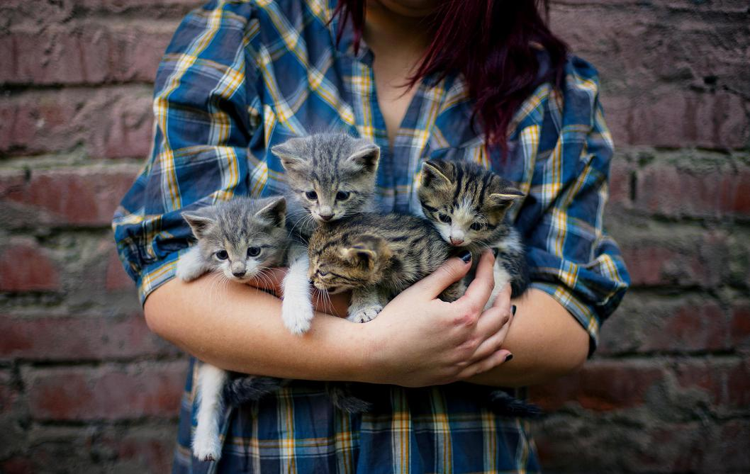 Les mystères des chats: 40 conseils pour les rendre heureux