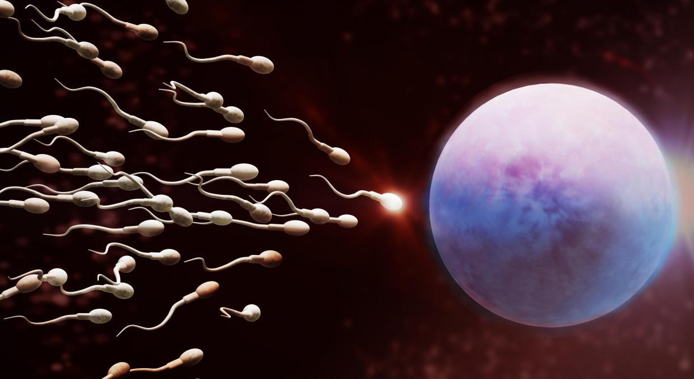 Guerre de spermes