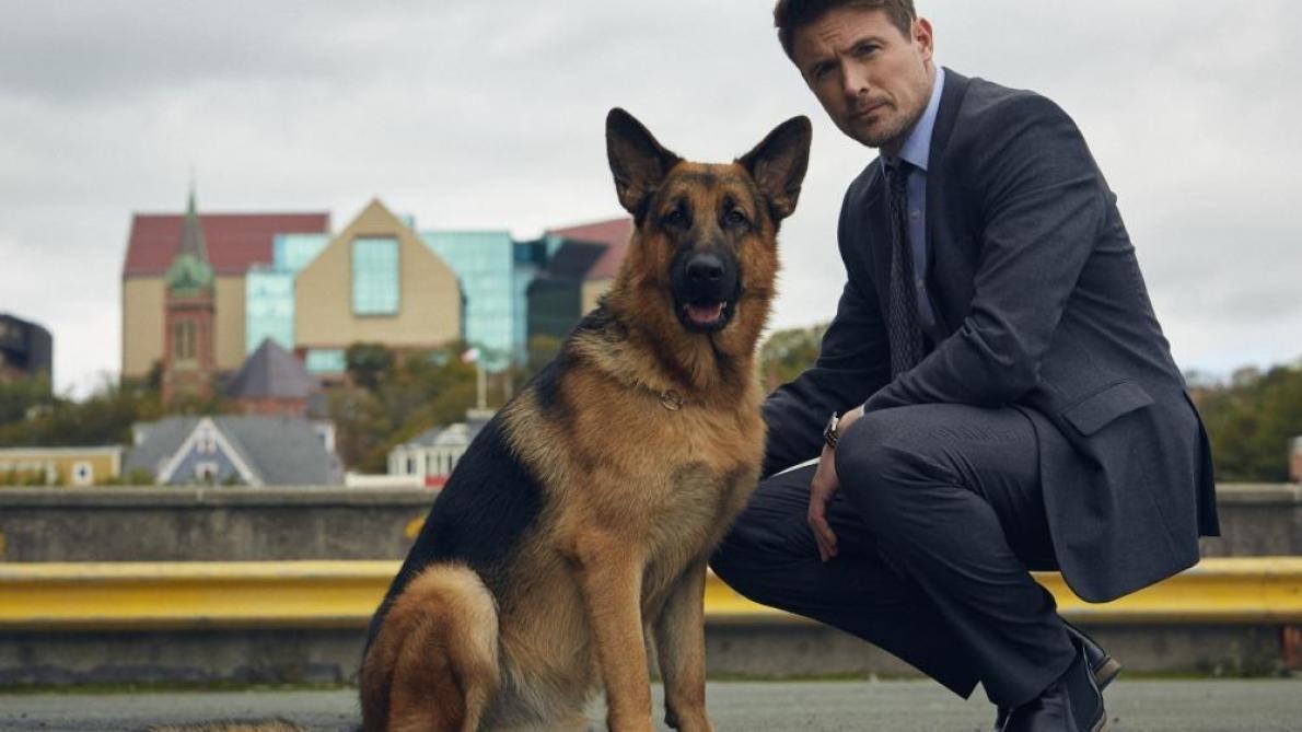 Rex, le célèbre chien policier, va faire son grand retour à la télévision