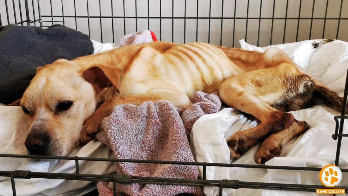 Fiona, une chienne de 5 ans retrouvée affamée dans un appartement à Wavre, provoque une vague de soutien parmi les célébrités belges