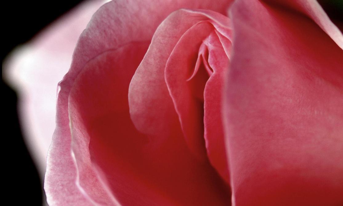 La vulva è bella!