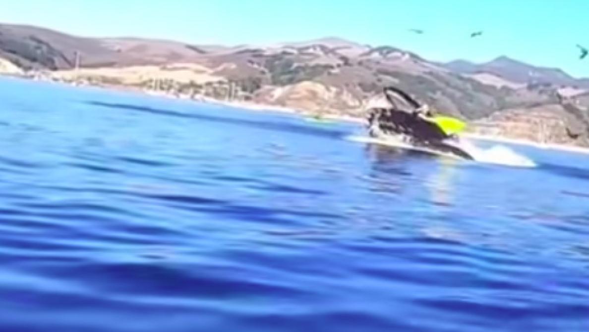 VIDÉO - Deux kayakistes (presque) englouties par une baleine