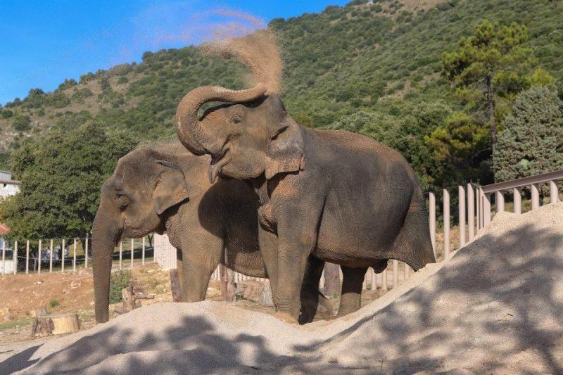 Népal, l'éléphante du parc de la Tête-d'Or est décédée