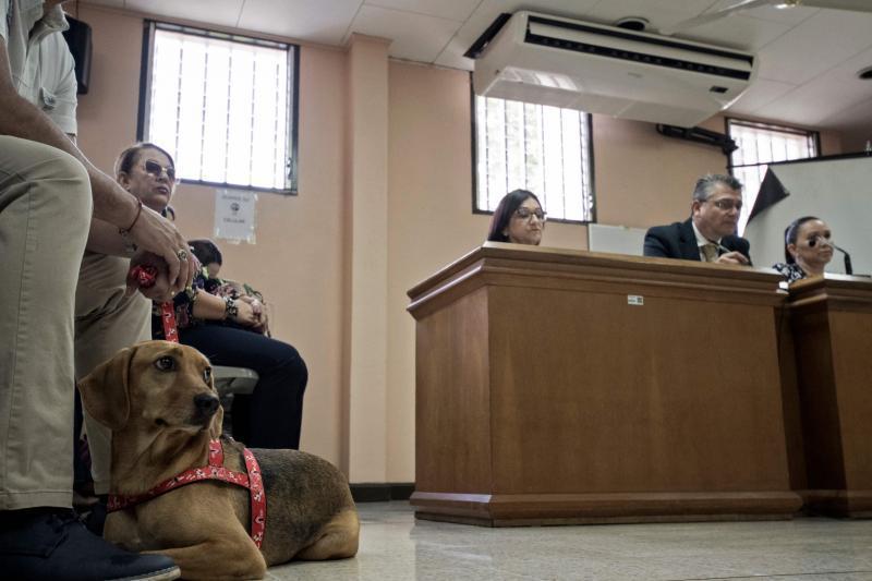 Amérique latine: premier procès devant un tribunal d'un chien victime de maltraitance